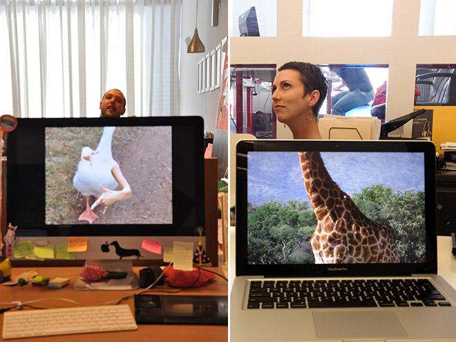 office-safari14