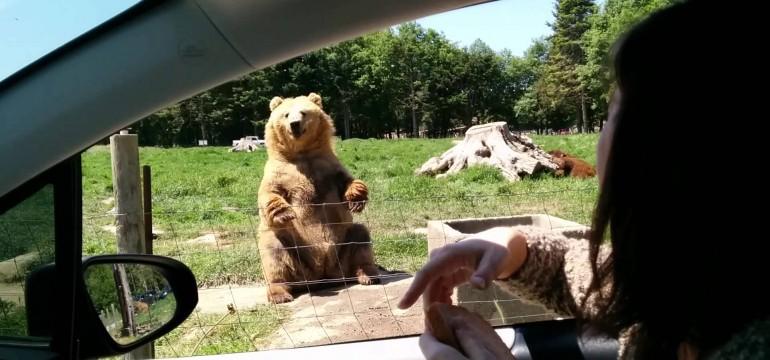 O Urso mais gente fina da Terra