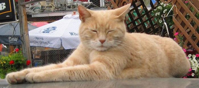 Um gato foi eleito prefeito do Alasca